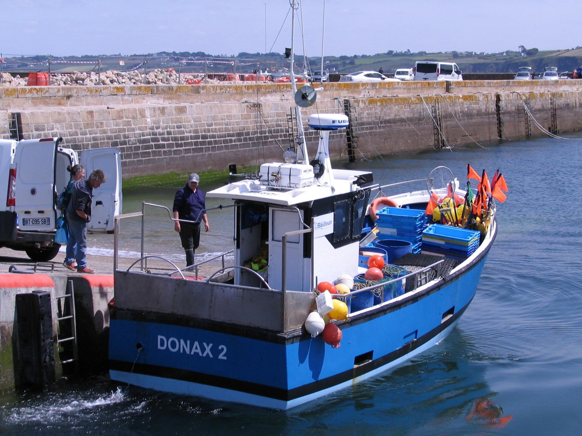200516 donax 2 g